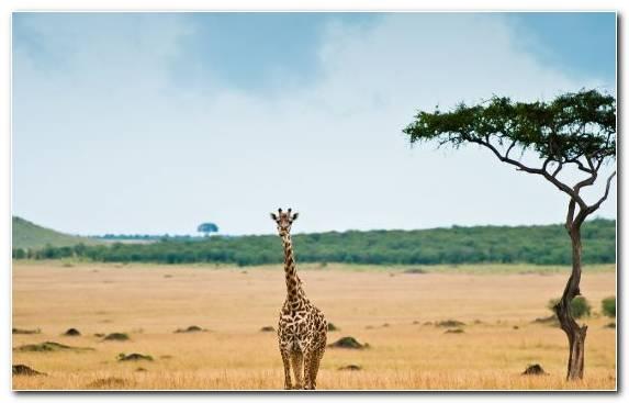 Image Grazing Sky Wildlife Grassland Ecosystem
