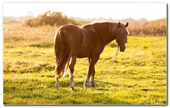 Image Grazing Stallion Ecosystem Pasture Horse