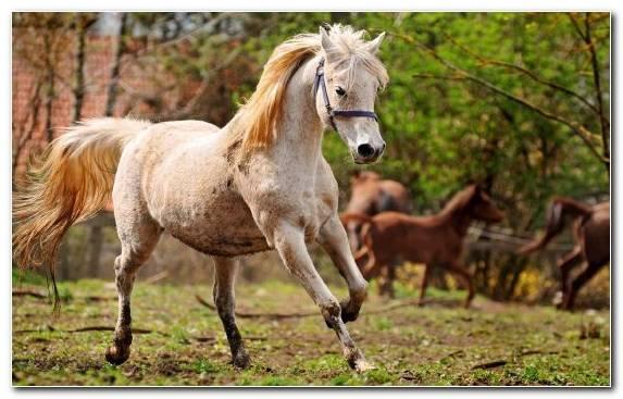 Image Grazing Wildlife Pasture Donkey Mustang Horse