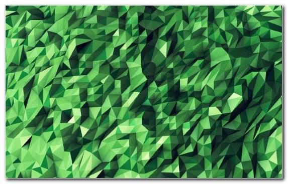 Image Green Plant Pattern Leaf Grasses