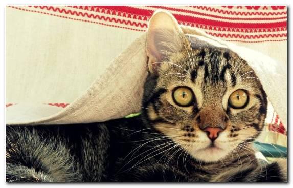 Image Grumpy Cat Whiskers Dog Eye Cat