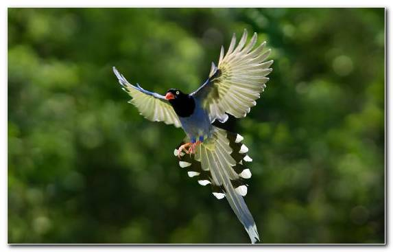 Image Handheld Devices Wildlife Passerine Wing Bird