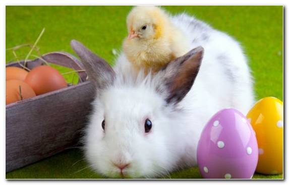 Image Hare Cuteness Easter Egg Fauna Easter Customs
