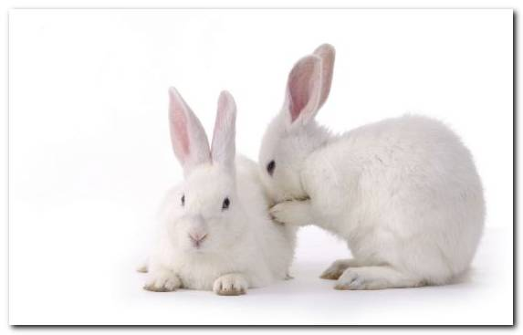 Image Hare Rabbit Snout Rabits And Hares Pet