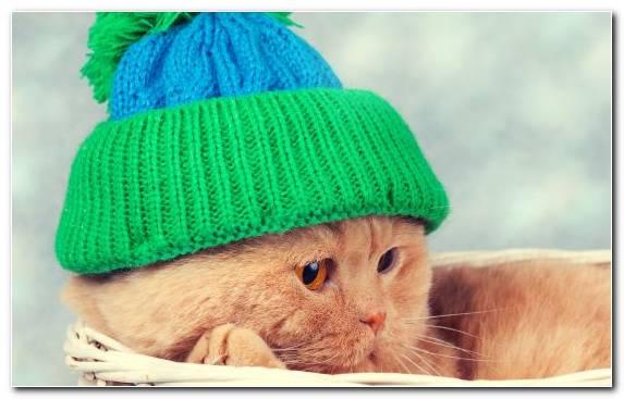 Image Headgear Kitten Green Fashion Accessory Hat