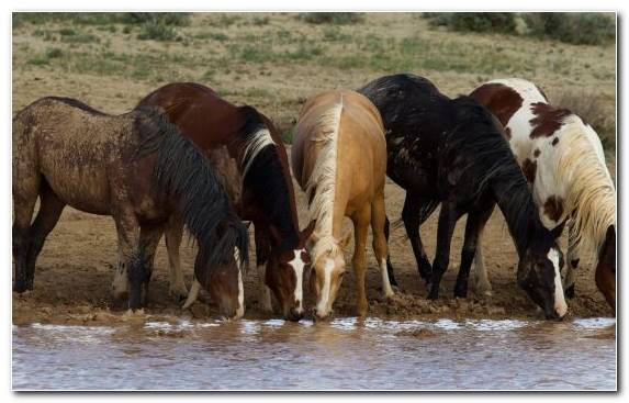 Image Herd Animal Film Horses Pack Animal