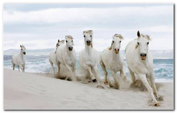 Image Herd Ecoregion Wildlife Camargue Horse Beach