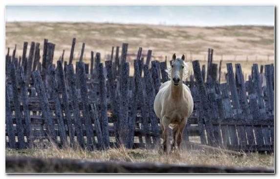 Image Herd Grass Fence Livestock Grazing