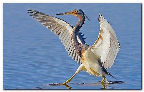 Image Heron Bird Dog Like Mammal Great Blue Heron Ibis