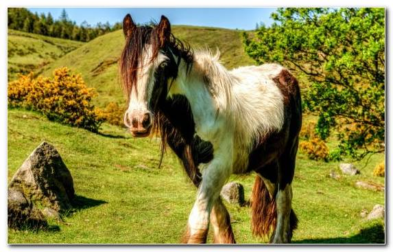 Image Horse Animal Grass Rural Area Horses