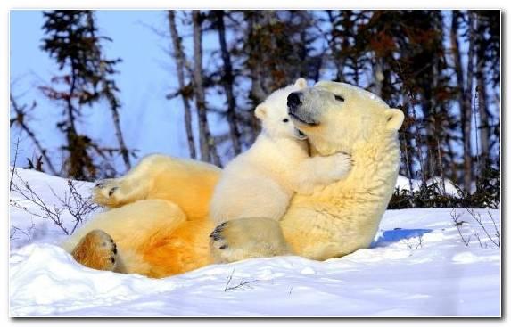 Image horse bear terrestrial animal snout wildlife