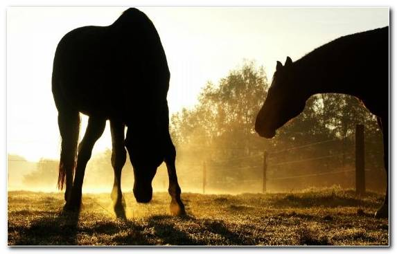 Image Horse Grazing Stallion Music Grasses
