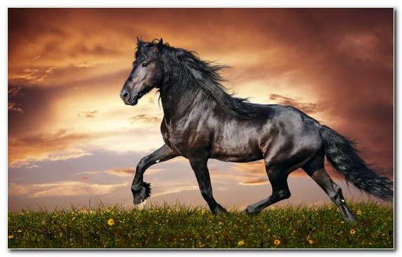 Image Horse Hoof Sky Fauna Mane Horse