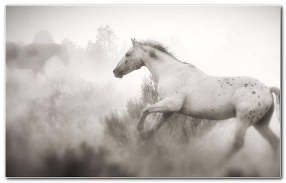 Image Horse Mustang Horse Horses Stallion Mane