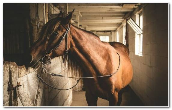 Image Horse Mustang Painting Canvas Rein
