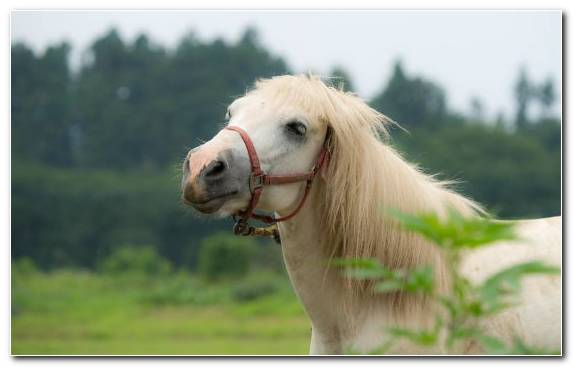 Image Horse Mustang Pony Mane Grazing