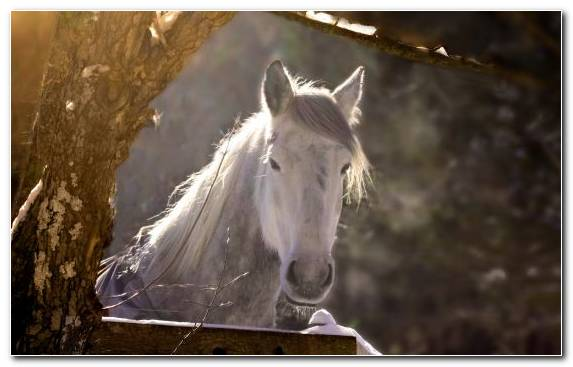 Image Horse Nature Mustang Horse Equestrian Cat