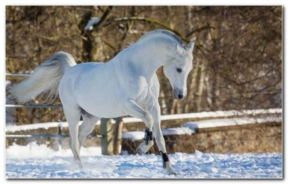 Image Horse Stallion Mare Horses Halter