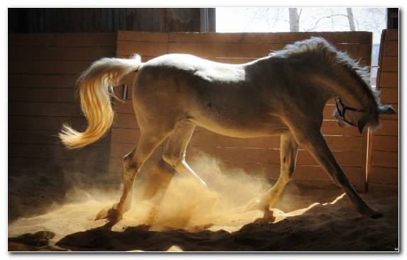 Image Horse Supplies Horse Tack White Mare Horses
