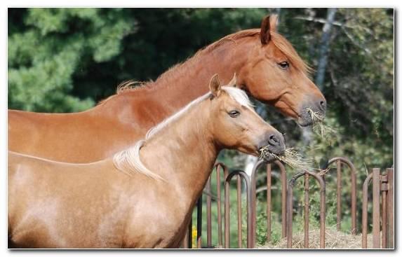 Image Horse Tack Animal Halter Bridle Stallion