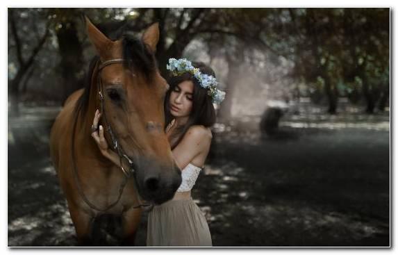 Image Horse Tack Bridle Stallion Horse Mane