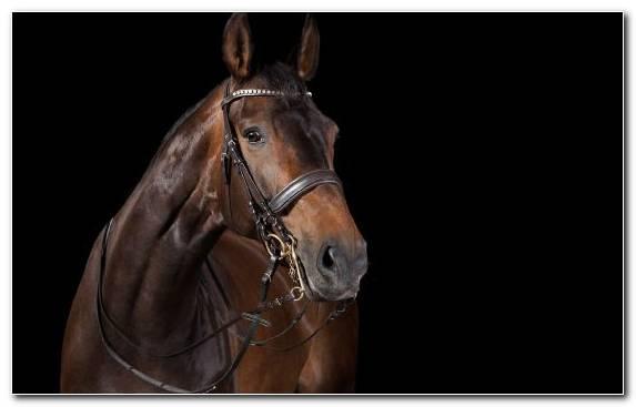 Image Horse Tack Horse Harness Bridle Halter Horse