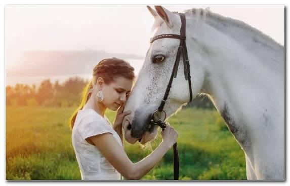 Image Horse Tack Mustang Horse Girl Mane Nature
