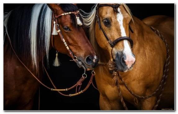 Image Horse Tack Rein Mane Halter Bridle