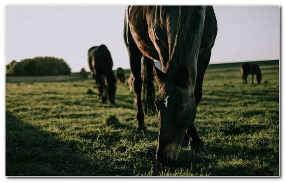 Image Horse Veterinarian Pasture Grassland Black