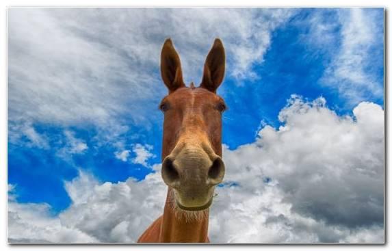 Image Horse Wildlife Horses Donkey Mule