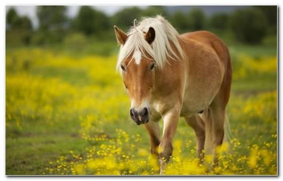 Image Horse Wildlife Horses Mustang Horse Animal
