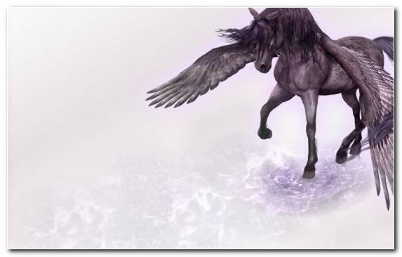 Image Horse Wildlife Mane Mustang Horse Pegasus