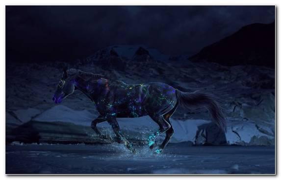 Image Horses Arabian Horse Stallion Darkness Night