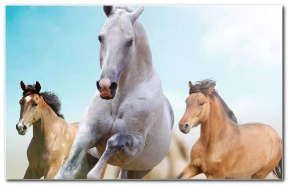 Image Horses Foal Mustang Horse Creative Arts Canvas