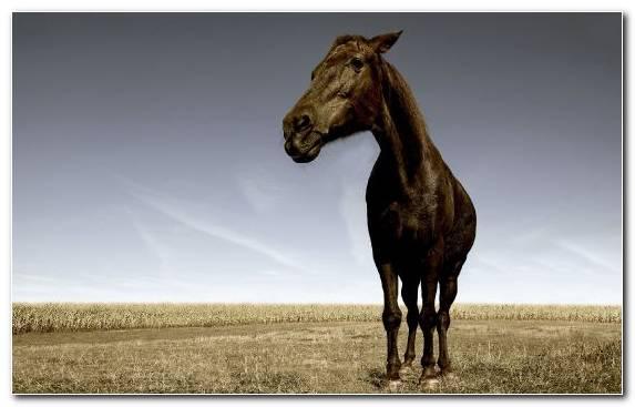 Image Horses Grassland Grazing Mane Ecosystem