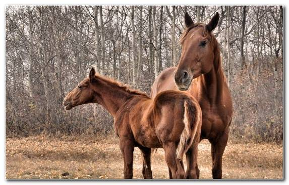 Image Horses Grazing Mare Mustang Horse Tree