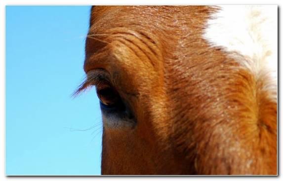 Image Horses In Art Nose White Eye Close Up