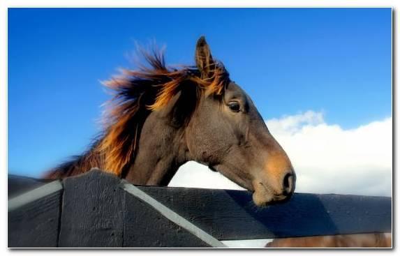 Image Horses Mane Stallion Sky Bridle