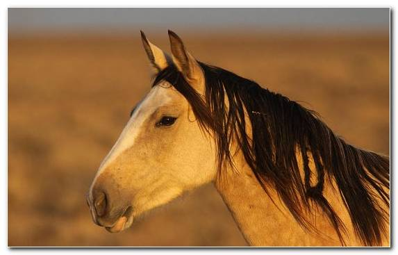 Image Horses Mare Horse Mustang Horse Shire Horse