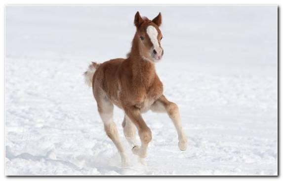 Image Horses Mare Mane Colt Snow