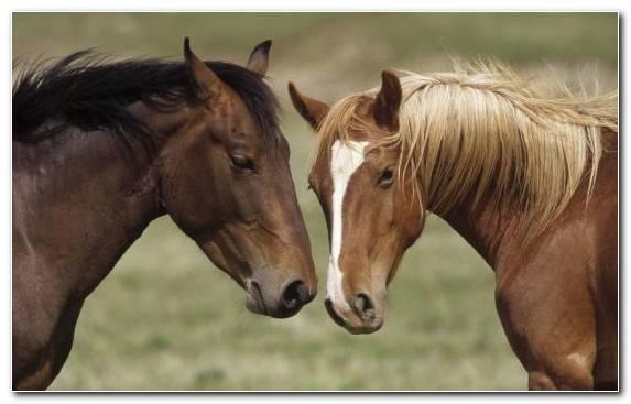 Image Horses Mare Pasture Rein Wildlife