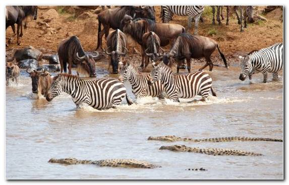 Image Horses Nile Crocodile Safari National Park Savanna