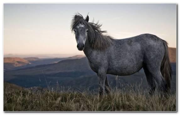 Image horses steppe horse ecoregion stallion