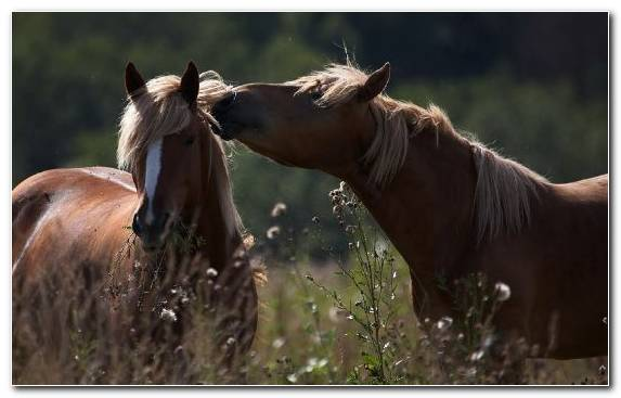 Image Horses Wildlife Mustang Horse Horse Riding Horse
