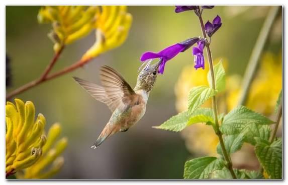 Image Hummingbird Nectar Bird Plant Beak