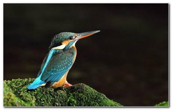 Image Hummingbird Parrot Piciformes Lovebird Bird