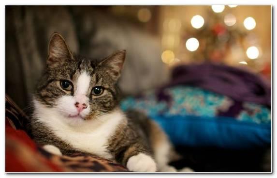 Image Humour Aegean Cat Tabby Cat Meow Kitten
