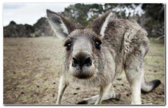 Image Humour Internet Meme Animal Terrestrial Animal Wallaby