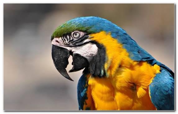 Image Hyacinth Macaw Pierrot Common Pet Parakeet Parakeet Scarlet Macaw