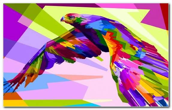 Image Illustration Bald Eagle Philippine Eagle Macaw Graphic Design